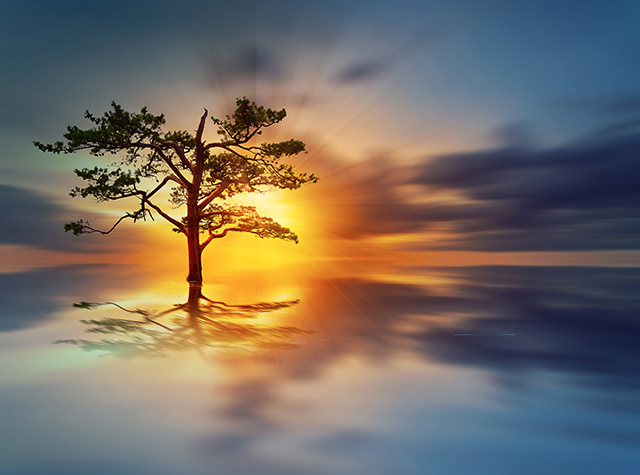 A single tree in the water at sunrise
